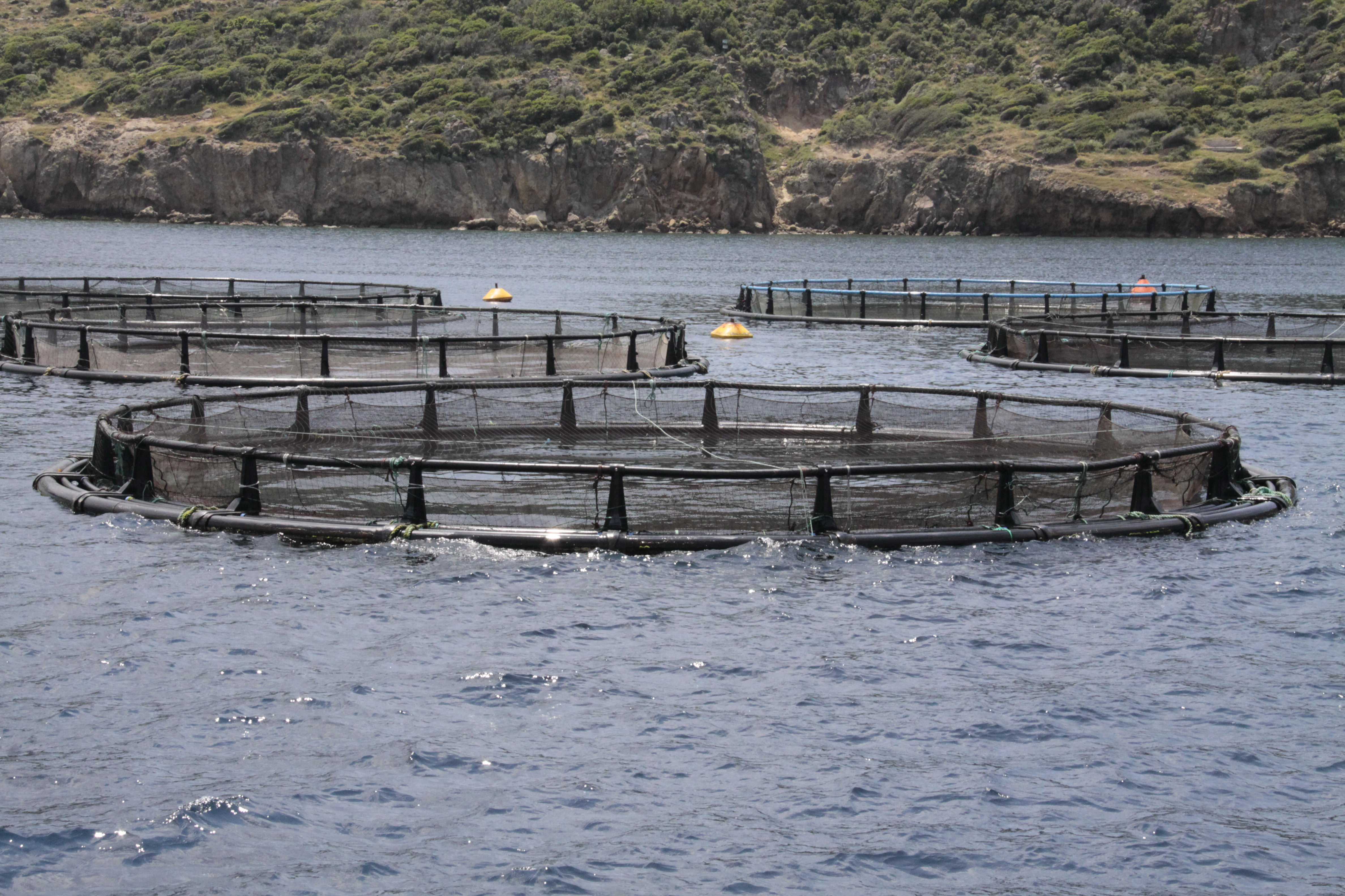 Aquaculture site in the Mediterranean II